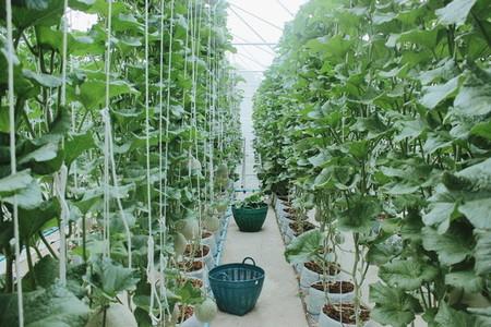 Melon farm 10