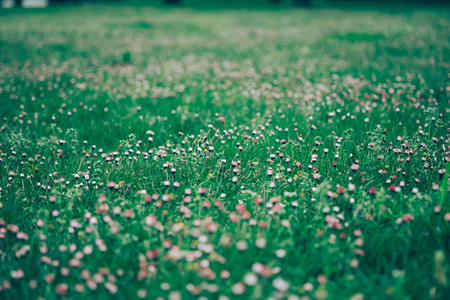 grass and daisies