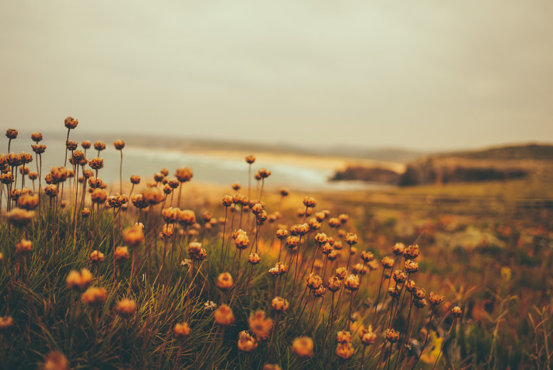 wildflowers at the coast