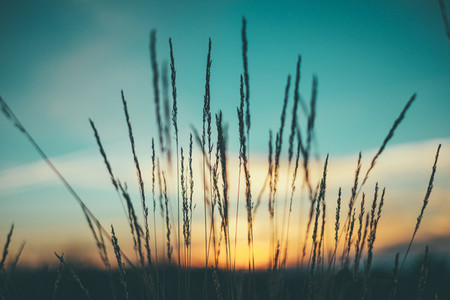 sky sunset and wild grass