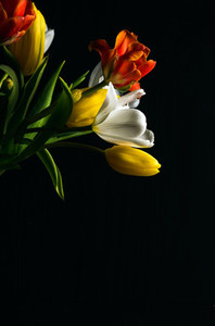 Beautiful flower bouquet of colorful tulips on black background