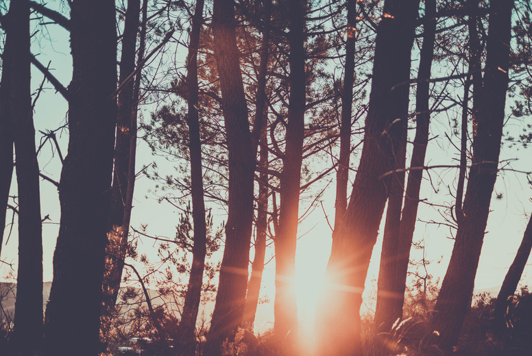 sunshine on the trees