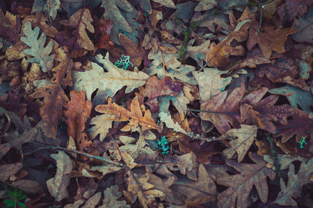 fallen leafs