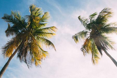 Vintage Palm Trees