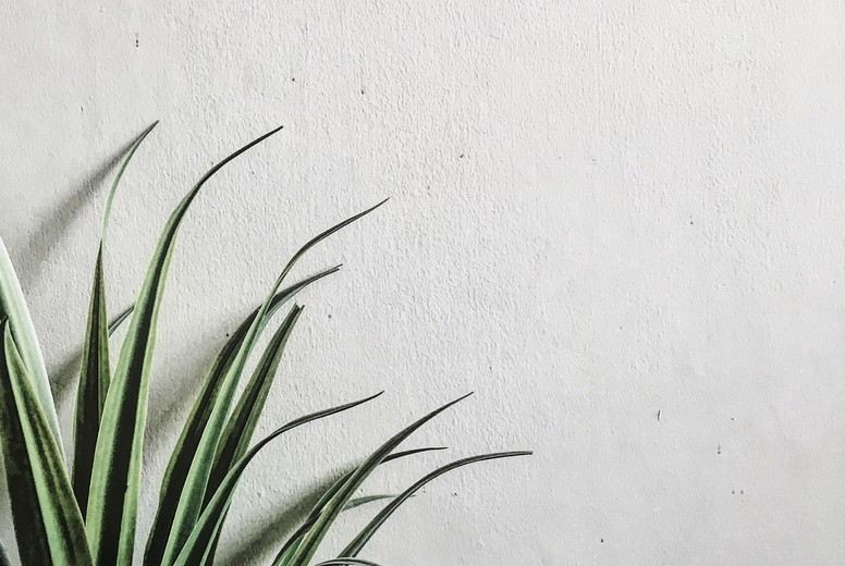 Green plants leaf on white wall
