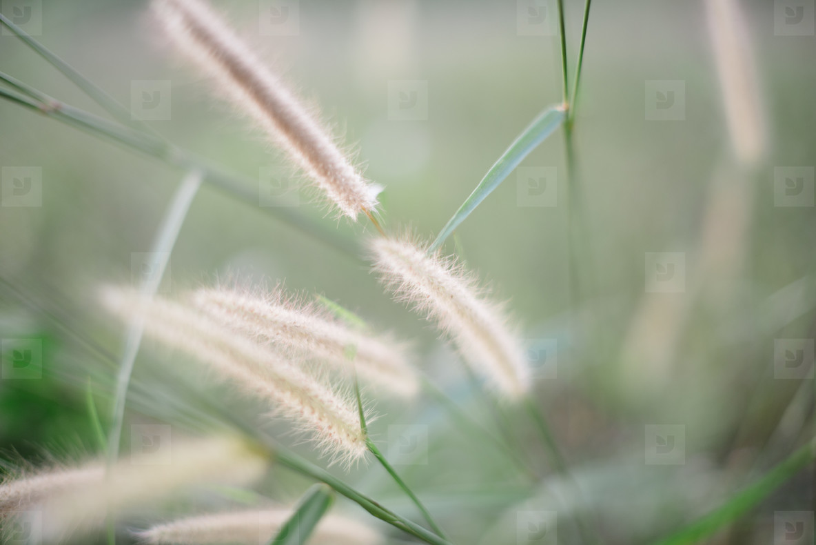 Grass flowers blurred background