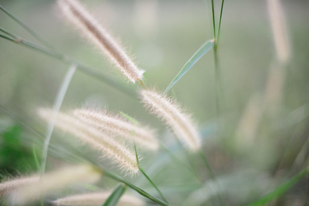 Grass flowers blurred background