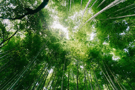 Angle view of bamboo forest