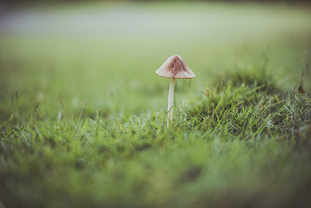 Small mushroom in the grass