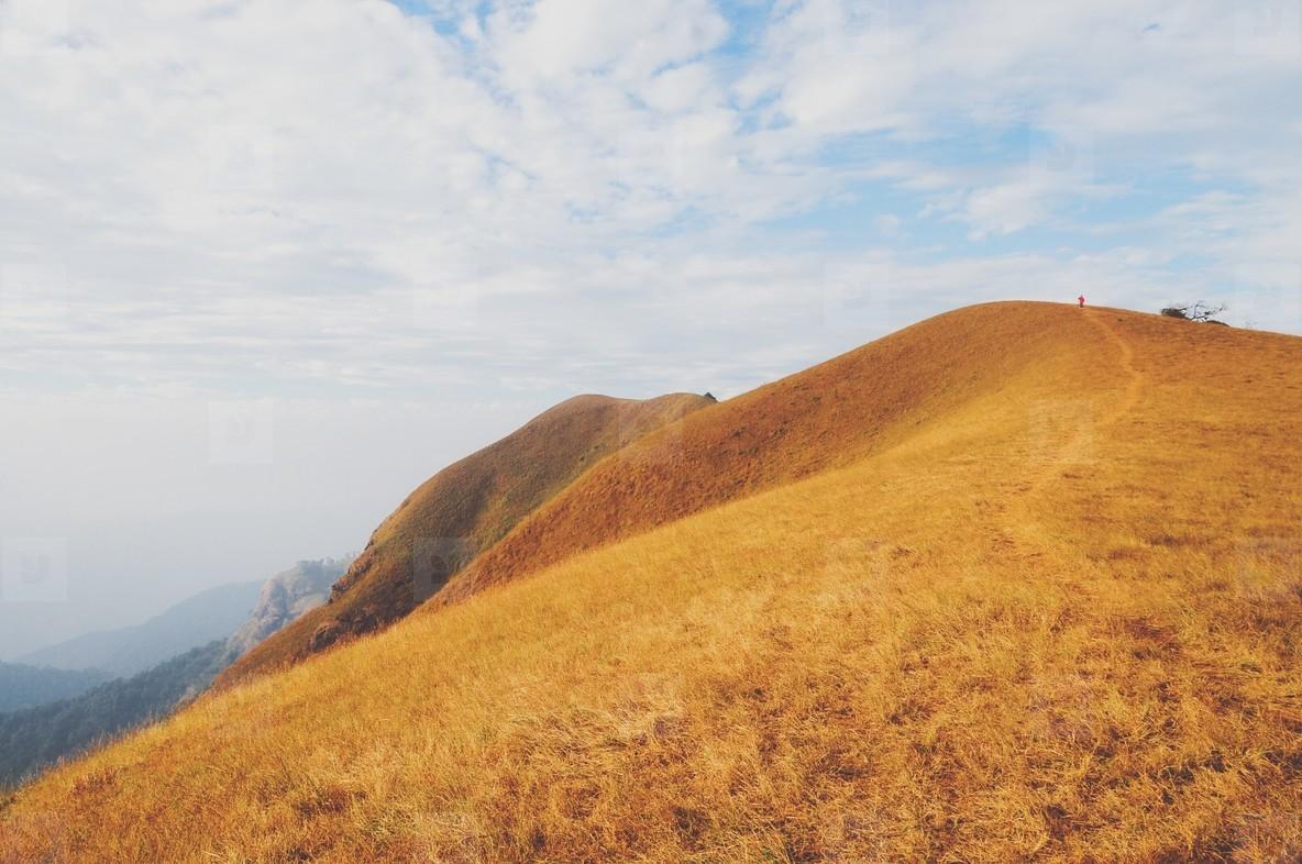 Dry golden grasses in mountain