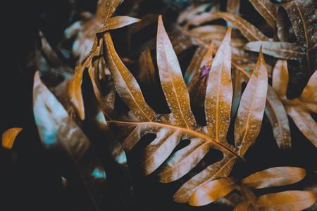 Dark Botanical Garden 01