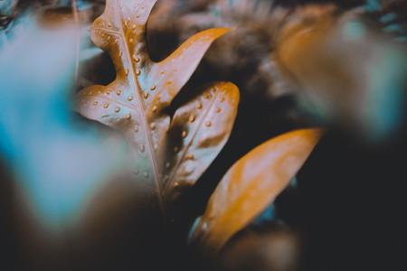 Dark Botanical Garden 02