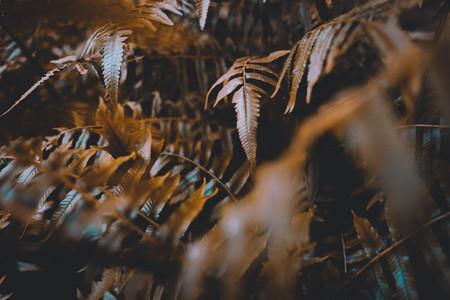 Dark Botanical Garden 04