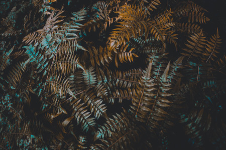Dark Botanical Garden 15