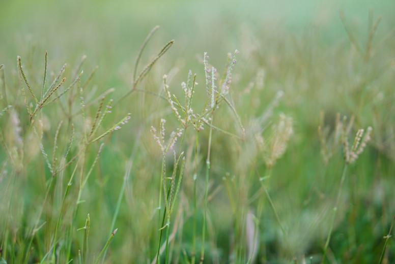 Grass flowers in the field
