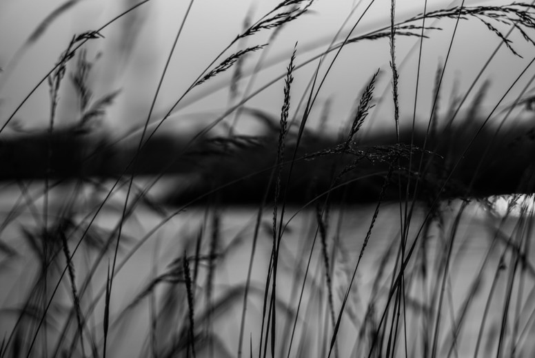 Grass field  Black and White