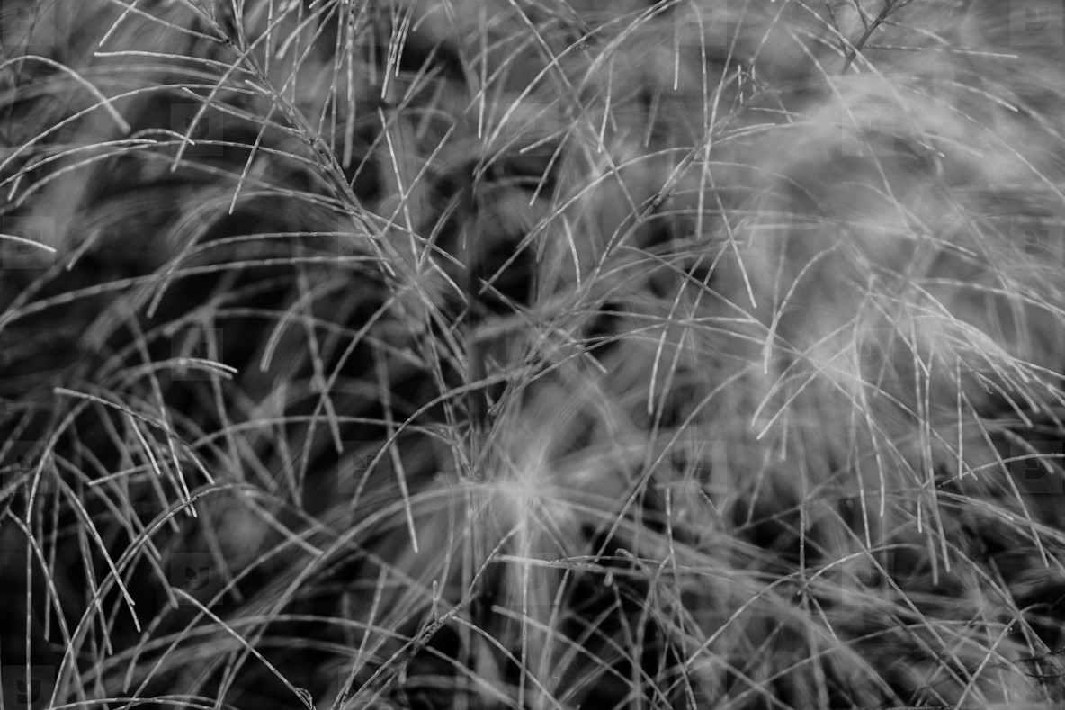 Abstract Grass Field