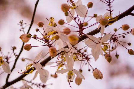 Spring Blossoms 01