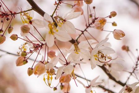 Spring Blossoms  03
