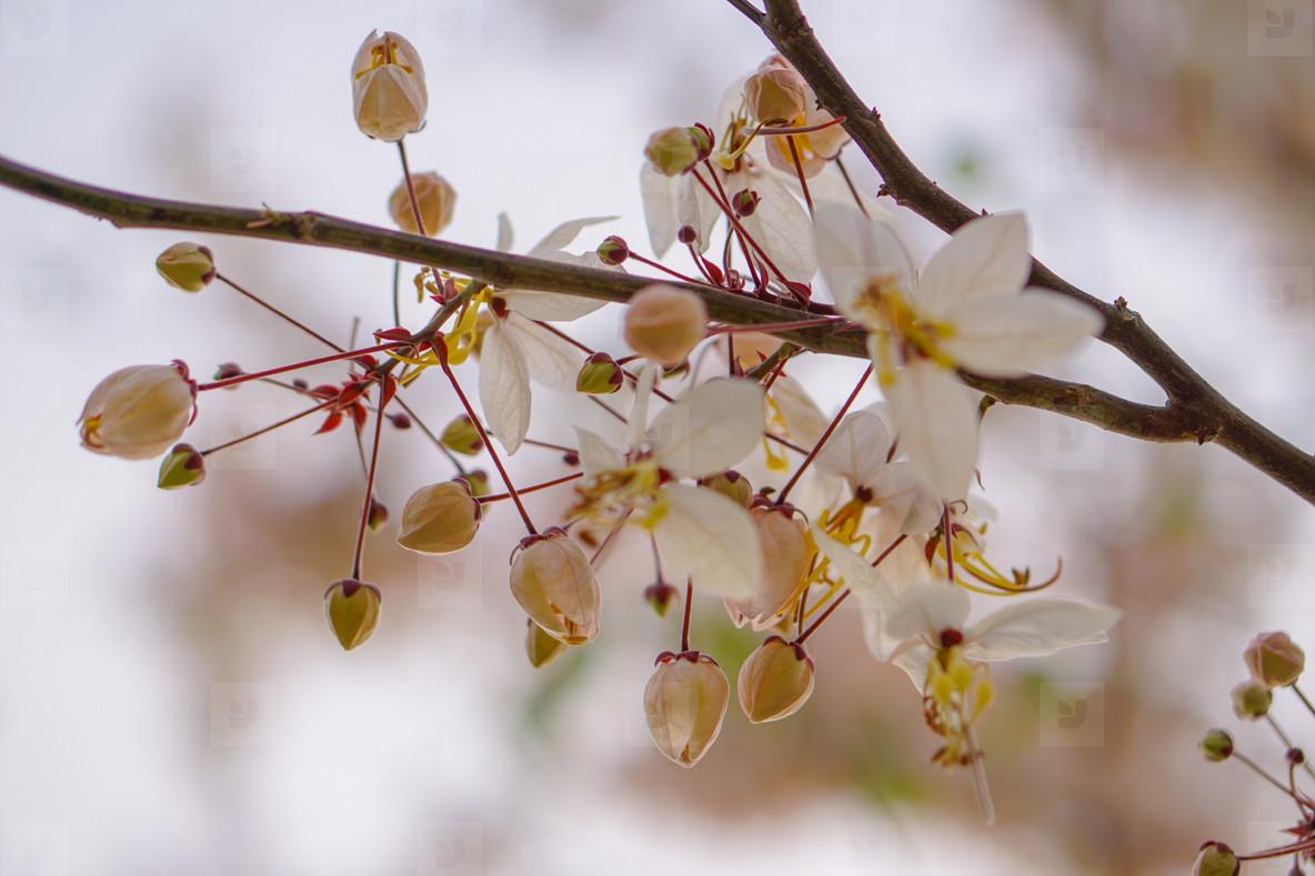 Spring Blossoms  04