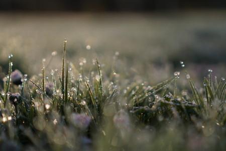 morning lawn