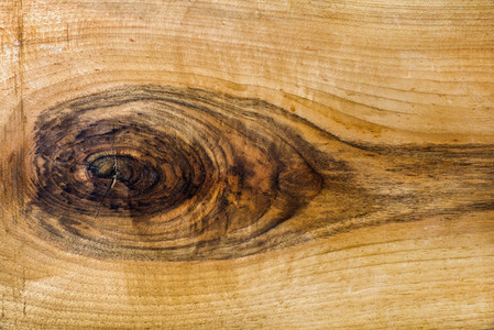 Natural wood slab texture  background and wallpaper