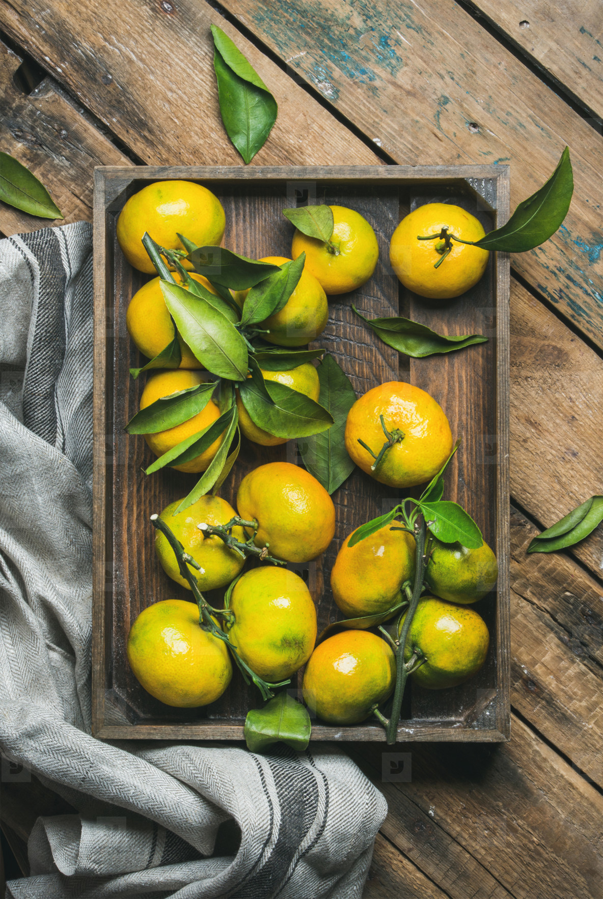 Fresh picked Mediterranean tangerines with green leaves in crate