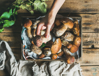Porcini mushrooms in wooden tray and woman s hand holding mushroom