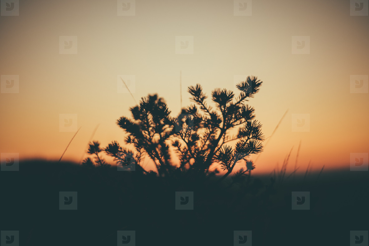 branch and sunset