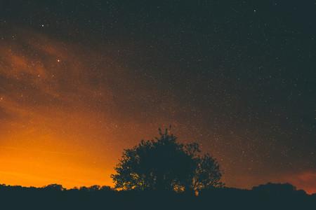 stars over tree