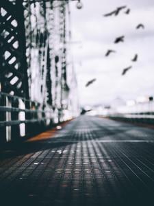 Bridge and Birds
