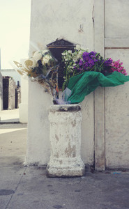 Flowers in front of a white grav