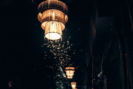 Moths hovering around a lantern