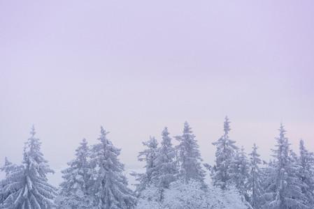 Snowed Under 07