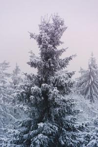 Snowed Under 09