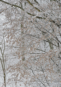 Snow Blossoms 23