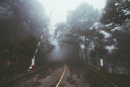 Misty foggy forest road