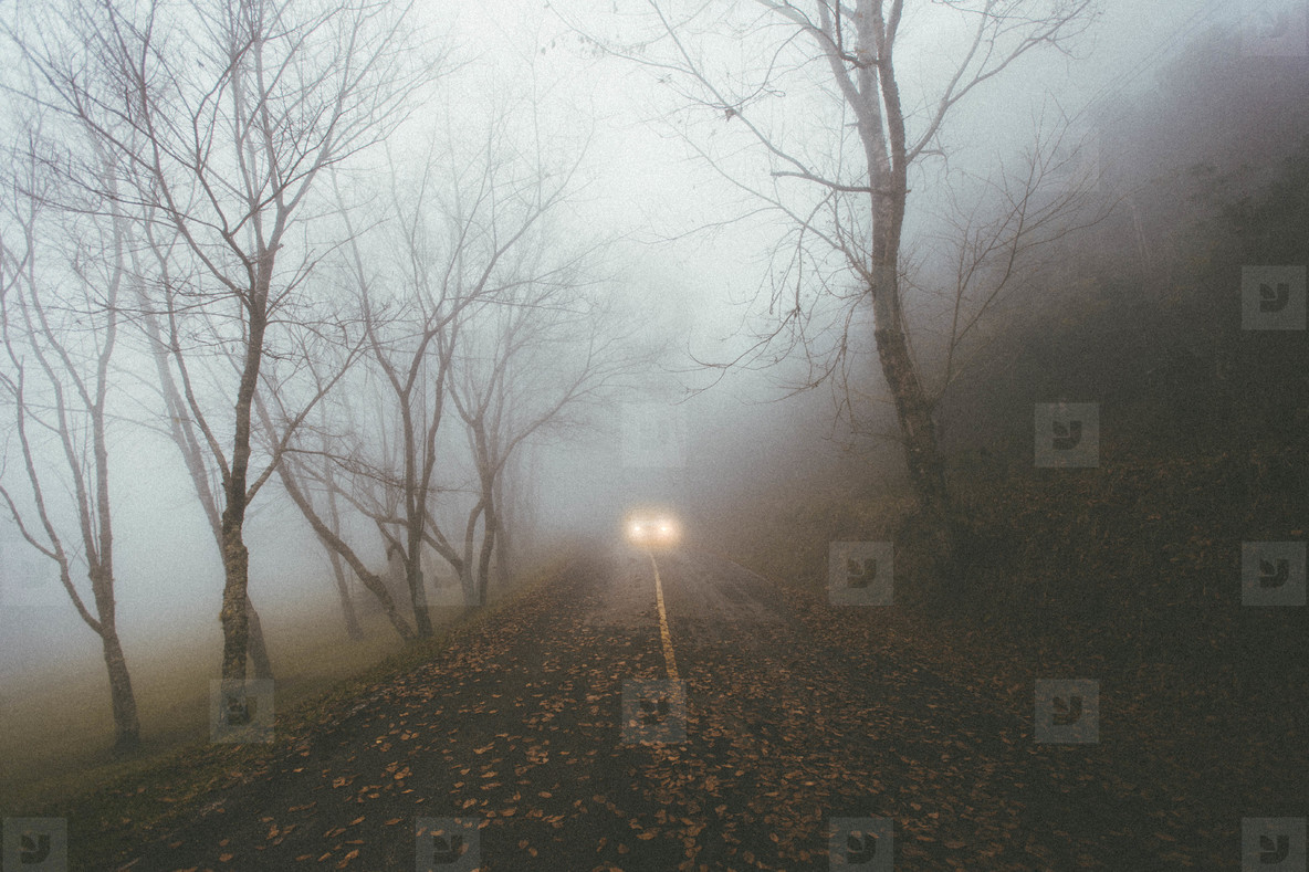 Car driving on foggy forest road