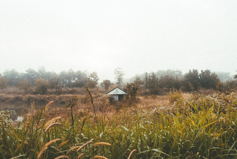 Field of grass with small hut