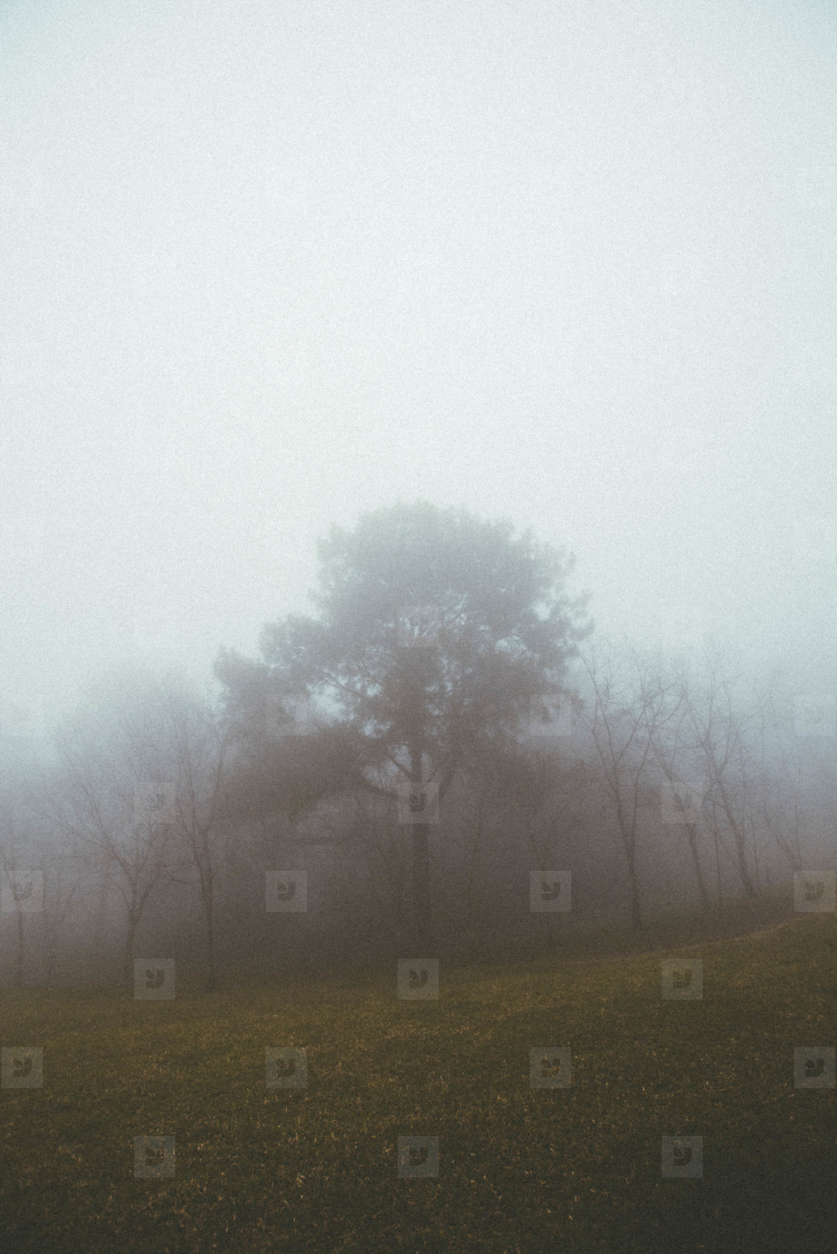 Misty foggy forest