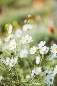 Spring flower  02