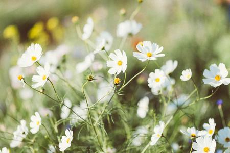 Spring flower 03