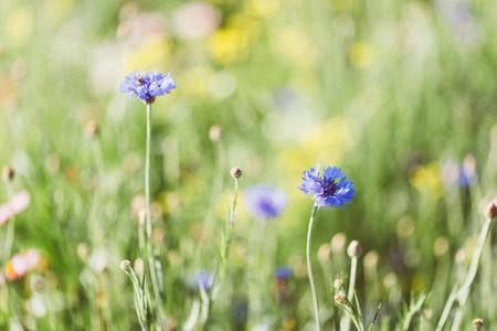 Spring flower  04