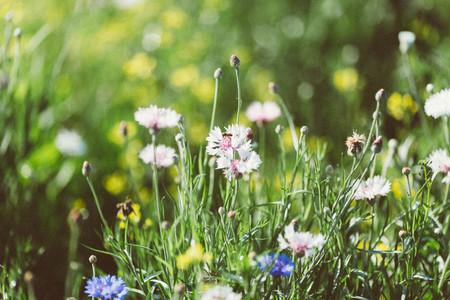 Spring flower 05