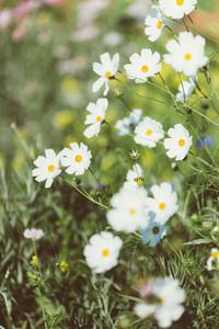 Spring flower 06