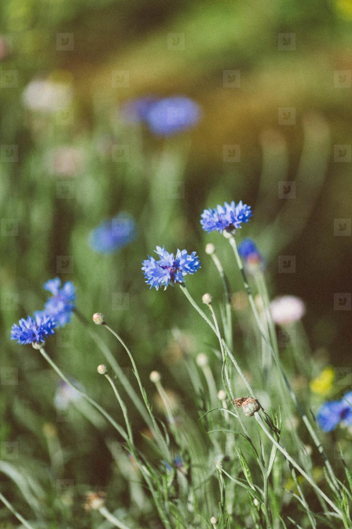 Spring flower  07