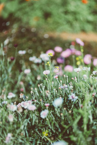 Spring flower  08