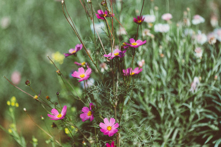 Spring flower  09