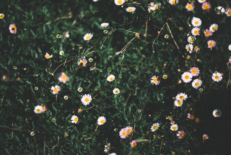 Spring flower  12