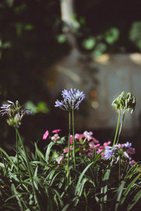 Spring flower 13
